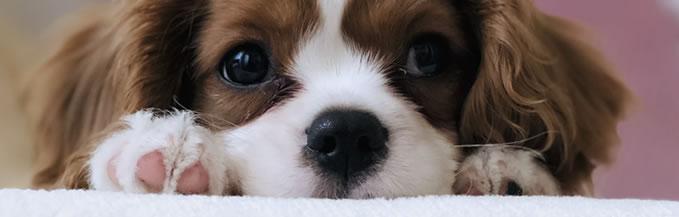 Nombres originales perros pequeños