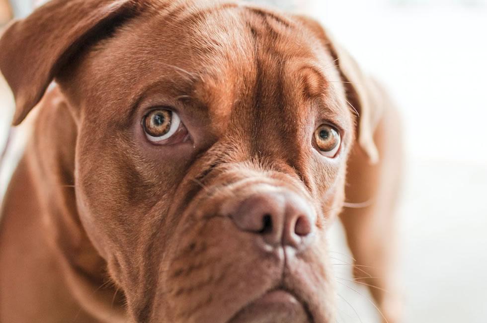 +100 Nombres originales de perros macho – Para todos los tamaños